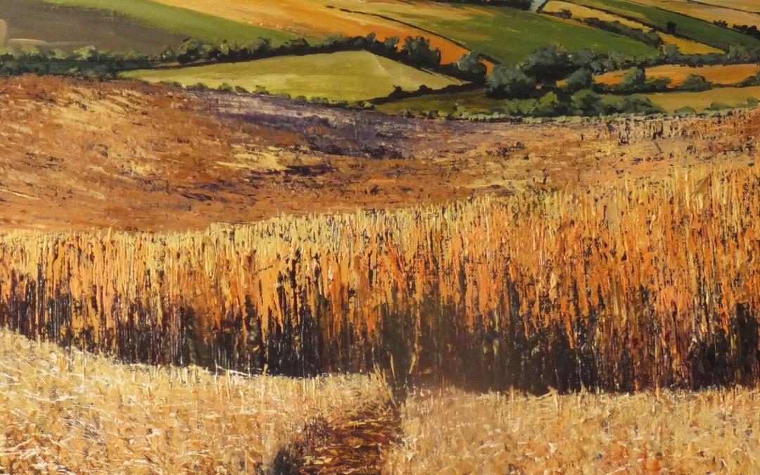 Ripe barley fields