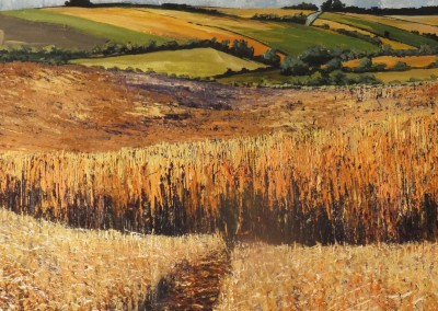 Ripe barley fields
