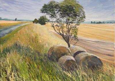 Forgotten bales of Hay