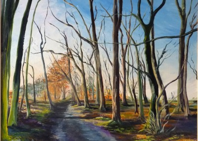 Woodland morning light