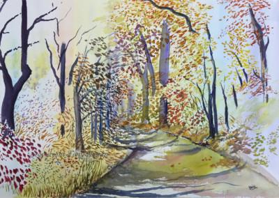 Autumn golds on woodland walk