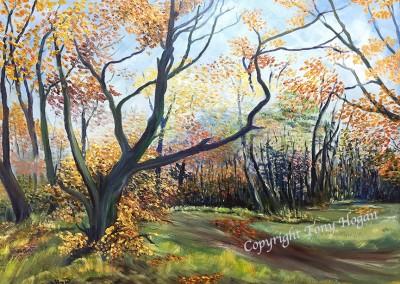 The magical Autumn woodland colours
